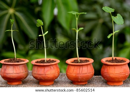 Plant growth stages - stock photo