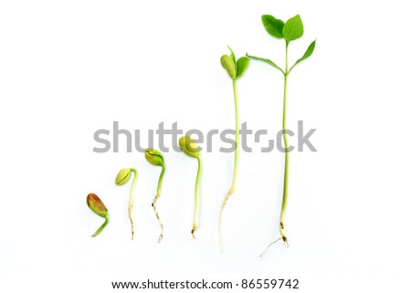 Plant growth-Stages of the plant development