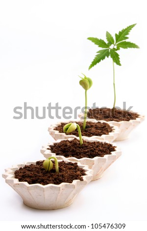 Plant growth-Stages of the plant development against white - stock photo