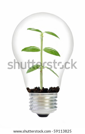 Plant in a bulb - stock photo