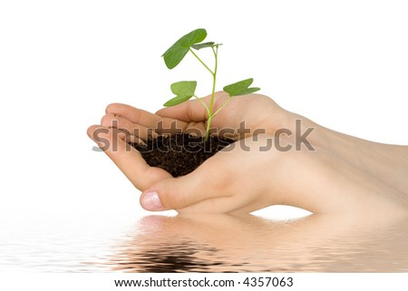 Plant in a hand - stock photo