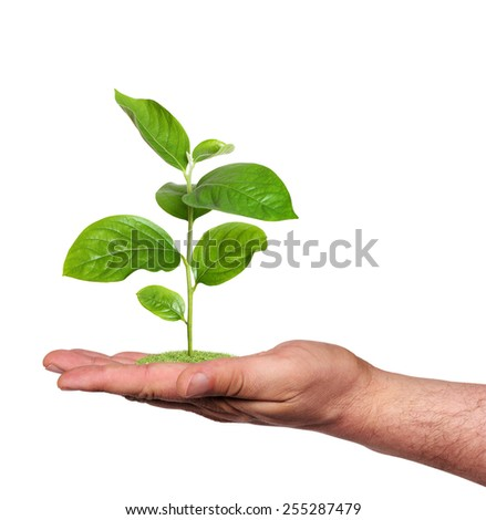 plant in a hand, isolated  - stock photo