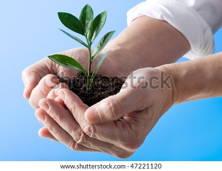 Plant in a hand isolated on blue background
