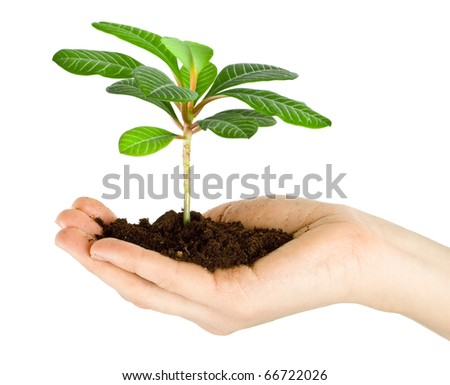 Plant in a hand isolated on white background - stock photo
