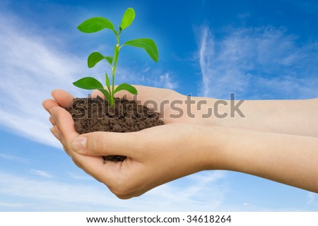 Plant in a hand over blue sky with clouds