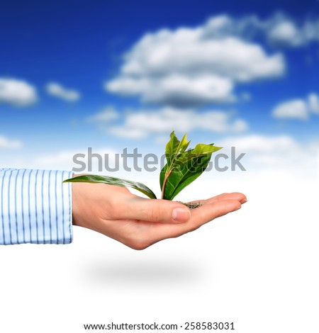 Plant in a hand over gray background. - stock photo
