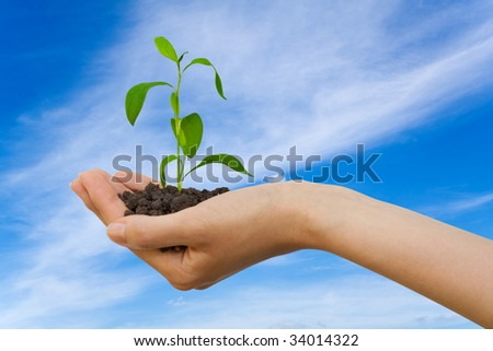 Plant in a hand over sky with clouds