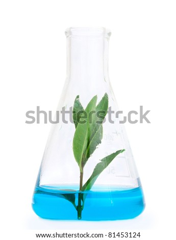 plant in a test tube isolated on white - stock photo