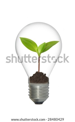 plant in bulb on white background