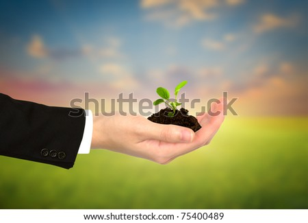 Plant in Business  hand - stock photo