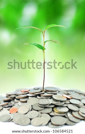 plant in coins on green background - stock photo