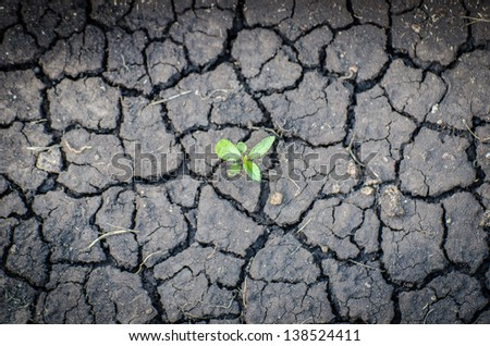 plant in crack soil texture - stock photo