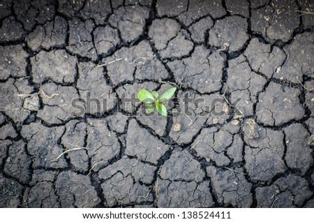 plant in crack soil texture - stock photo