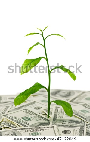 plant in dollars heap isolated