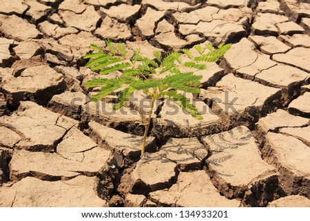 Plant in dried cracked mud,drought land so long waterless