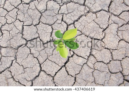 Plant in dried cracked top view background