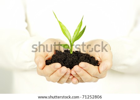plant in female hands - stock photo