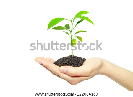 plant in female hands isolated on white background - stock photo