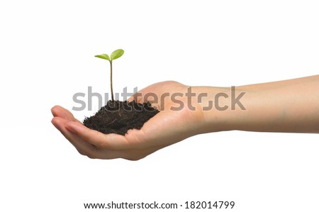 Plant in female hands isolated on white background.