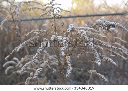 Plant in frost