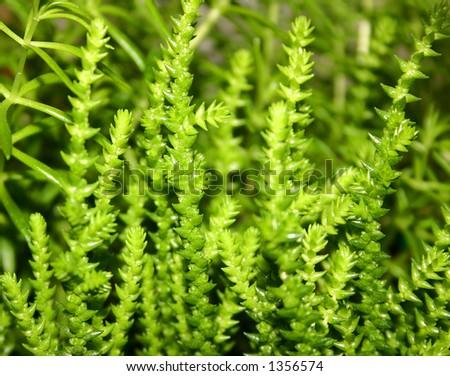 Plant in garden - stock photo