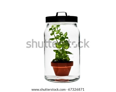 Plant in glass - stock photo