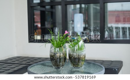 Plant in Glass Jar at cafe