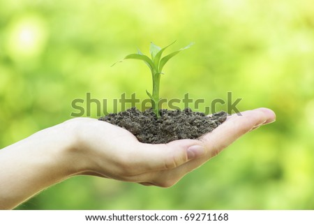 plant in hand - stock photo