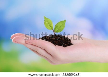 Plant in hand on light blue background