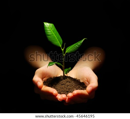 plant in hands - stock photo