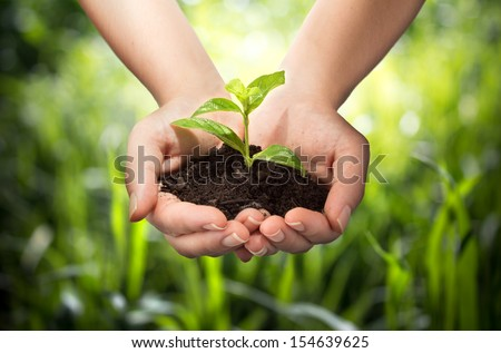 plant in hands - grass background  - stock photo