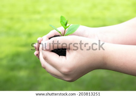 Plant in hands .Green plant with green background  - stock photo