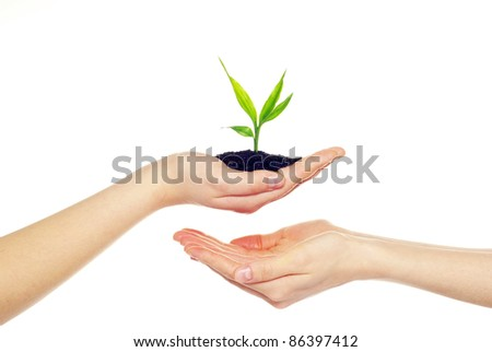 plant in hands isolated on white background - stock photo