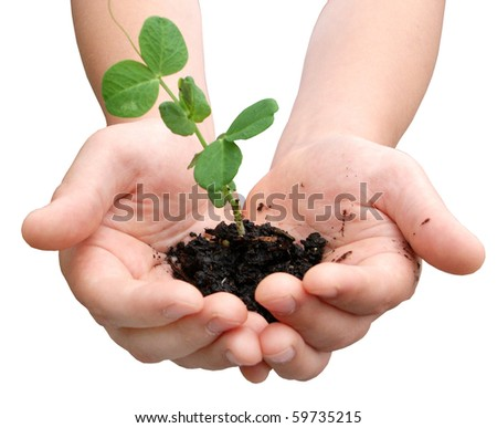 Plant in hands of a child