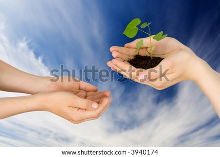 Plant in hands on a background of the sky with clouds - stock photo