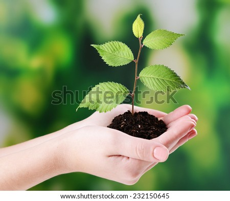 Plant in hands on bright background - stock photo