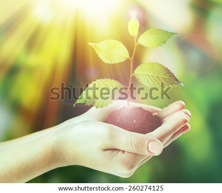 Plant in hands on sunny nature background - stock photo