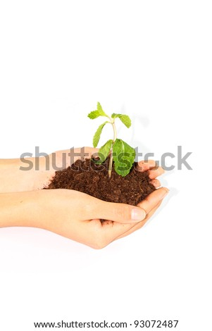 plant in  hands on white background - stock photo