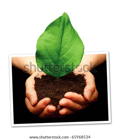 Plant in hands photography - stock photo