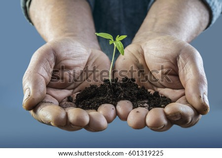 plant in  human handful