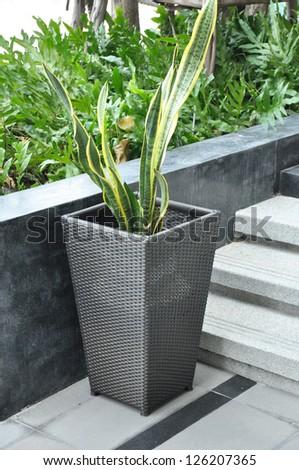 Plant in rattan flower pot - stock photo