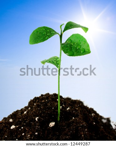 Plant in soil and blue sky with sun - stock photo