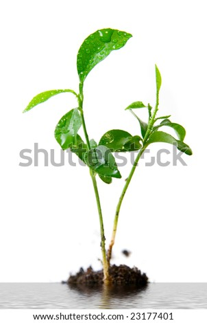 Plant in soil on white flood background - stock photo