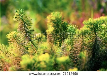 Plant in sunlight closeup - stock photo