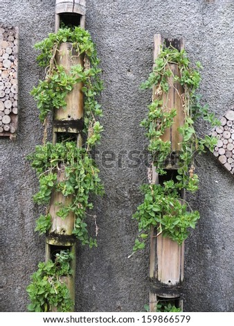 Plant in the bamboo - stock photo