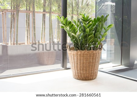 Plant in the basket for decoration - stock photo