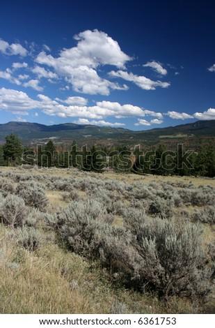 Plant in the foreground is sagebrush (artemisia tridentata). Steppe landscape of British Columbia. - stock photo