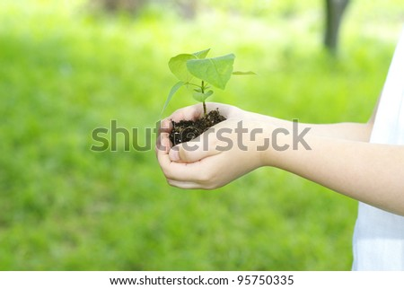Plant in the girl hands - stock photo