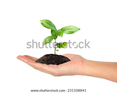 plant in the hand on white background - stock photo
