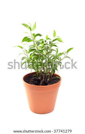 plant in the pot - stock photo